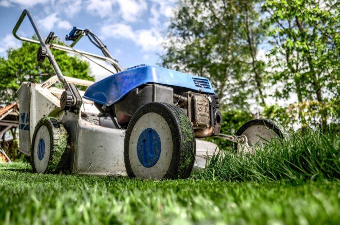 manutenzione del verde a roma